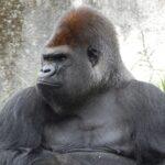 Ion, Maria si gorila