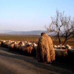 Ciobanul și logica românească