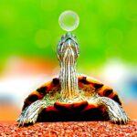 Parlamentarii și țestoasa
