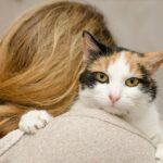Diferența dintre soacre și pisici