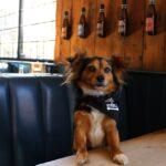 Un orb intră cu câinele într-un bar