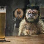 O maimuță intră într-un bar și comandă o bere